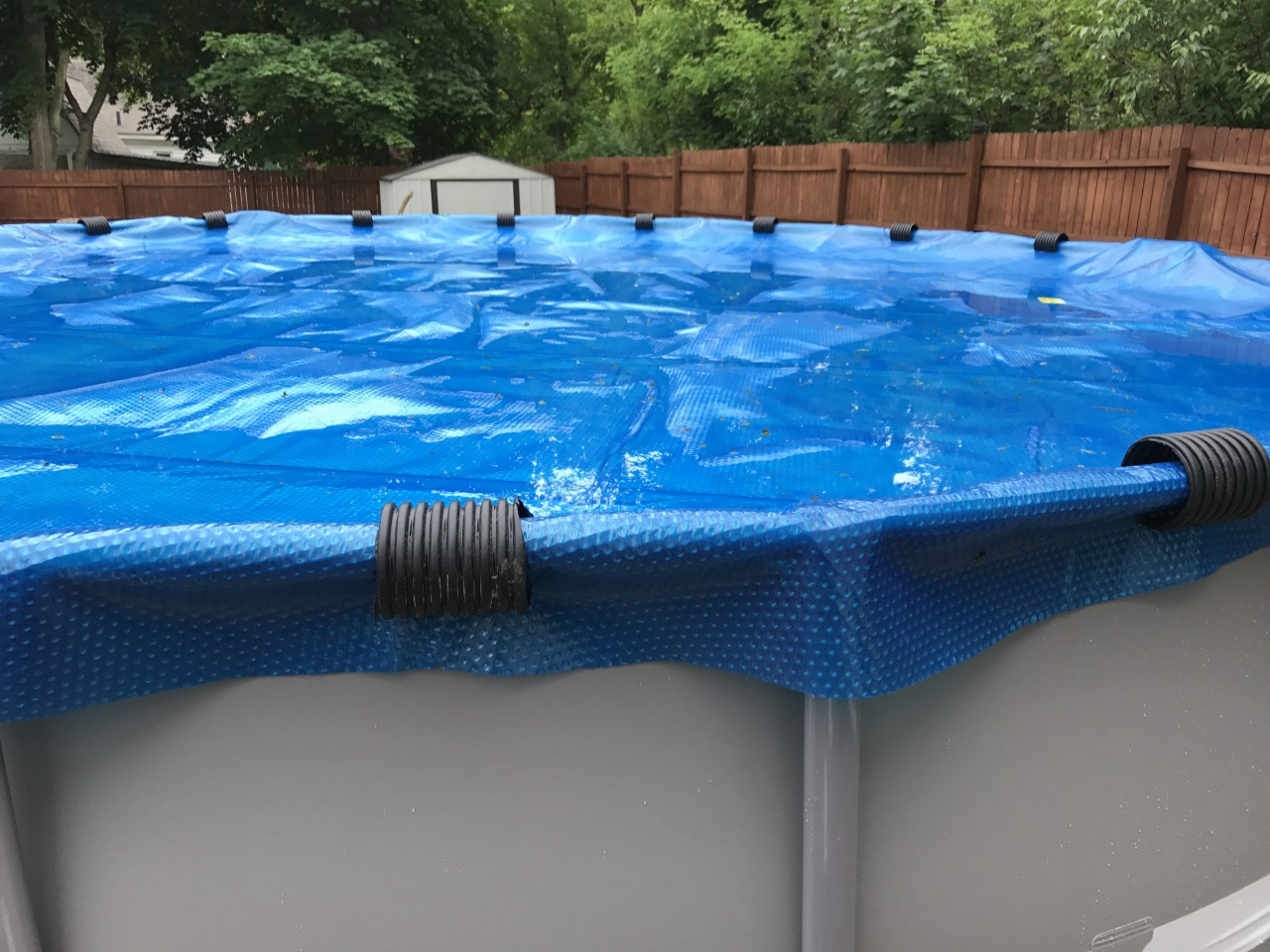 black algae in vinyl pool
